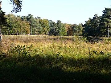 Landschaft Schwarzes Wasser.jpg