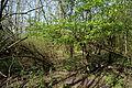 Landschaftsschutzgebiet Röderhofer Teiche und Egenstedter Forst - Sonnenberg-Wäldchen (2).JPG