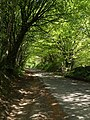 Lane to Higher Haye - geograph.org.uk - 429106.jpg