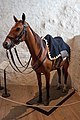 Last Hussar Horse, 2017-07-30.jpg