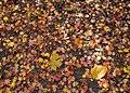 Leaves On The Floor (138542441).jpeg