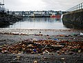 Leaves and litter, Bangor harbour - geograph.org.uk - 1575819.jpg