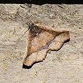 Lepidoptera (33065277704).jpg