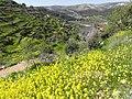 Lifta spring - panoramio (1).jpg