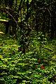 Little Red Flower Much Green Be Unique DSC 0166.JPG