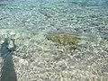 Long Beach - Tinian - panoramio (19).jpg