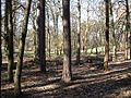Looking through the woods to Kiln Ground - geograph.org.uk - 373536.jpg