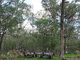 Ludlow sign Tuart Forest NP VII-2012.jpeg