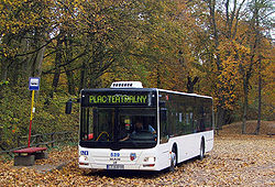 MAN Lion's City - MZK Toruń nr 539.jpg
