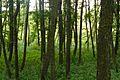 MOs810, WG 2014 48, powiat obornicki (Sycynskie lake) (2).JPG