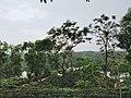 Madhupur National Park, Tangail, Dhaka.jpg