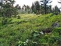 Madison County, MT, USA - panoramio (2).jpg