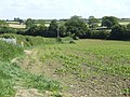 Maize field on the edge of Templecombe - geograph.org.uk - 459260.jpg