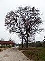 Malínky, strom a kříž.jpg