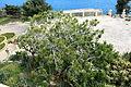 Malta - Valletta - Triq Girolamo Cassar - Herbert Ganado Gardens 02 ies.jpg