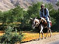 Man on donkey, Afghanistan.jpg