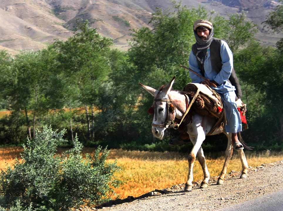 Man on donkey, Afghanistan