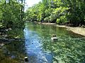 Manatee Springs State Park Florida outlet05.jpg