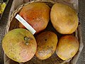 Mango Dot Asit fs8.jpg