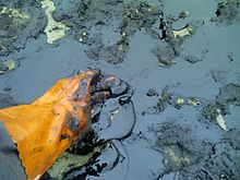 A worker's glove touches a dense patch of black oil on a sandy beach.