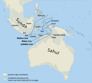 Early human migrations - The map shows the probable extent of land and water at the time of the last glacial maximum, 20,000 yrs ago and when the sea level was probably more than 110m lower than today.