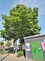 Marnixstraat begin Westerstraat, Bevrijdingslinde van de Jordaankinderen foto 3.jpg