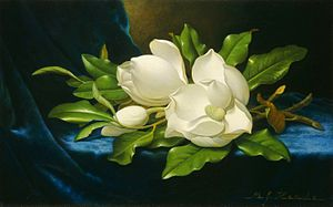 Giant Magnolias on a Blue Velvet Cloth (Martin Johnson Heade)
