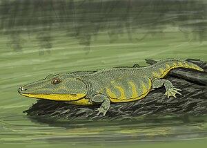 Capitosauria - Mastodonsaurus
