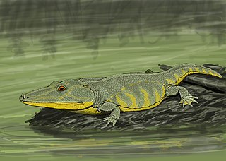 Capitosauria clade of reptiles (fossil)