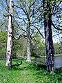 Meadows 3 (2480180527).jpg