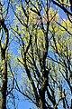 Meijendel spring 2001 10.jpg