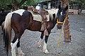 Mendoza by horse-8.jpg
