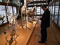 Michel Bassompierre au Muséum.jpg