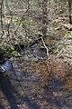 Mile Run looking downstream.jpg