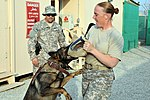 Military Police Dogs Train to Assist ISAF, ANA Locate IEDs, Narcotics DVIDS309807.jpg
