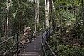 Minnamurra Rainforest - panoramio (19).jpg
