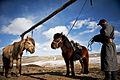 Mongolia Herding Life1.JPG