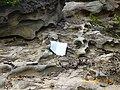 Monte Carangola em Tete - panoramio - Nelson Deolinda Amin… (13).jpg