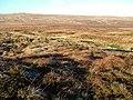 Moorland, Milburn Forest - geograph.org.uk - 1617121.jpg