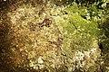 More moss (2913035523).jpg