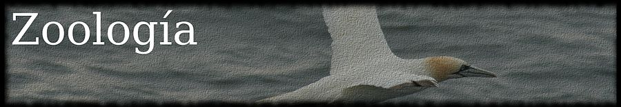 Morus bassanus - 7 îles - LOGO.jpg