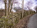 Mossy Wall - geograph.org.uk - 141157.jpg