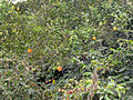 Mosteiros-Oranger (2).jpg