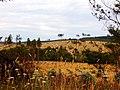 Mount Gambier farmland2.jpg