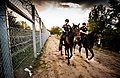 Mounted policemen at Hungary-Serbia border barrier.jpg