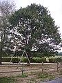 Moutier-d'Ahun - arbre de la liberté (01).jpg