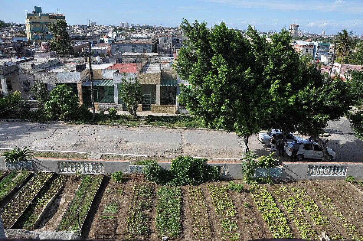 Agricultura urbana – Wikipédia, a enciclopédia livre