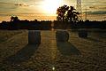 NSG 2168 Nußlocher Wiesen-Sonnenuntergang.jpg