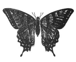 Tatoeage van de hoofdpersoon.