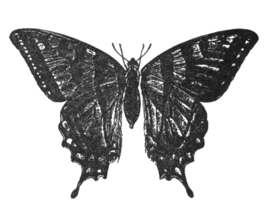 papillon tatoeage van de hoofdpersoon - Image De Papillon